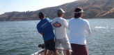 stripers, striped bass, castaic lake