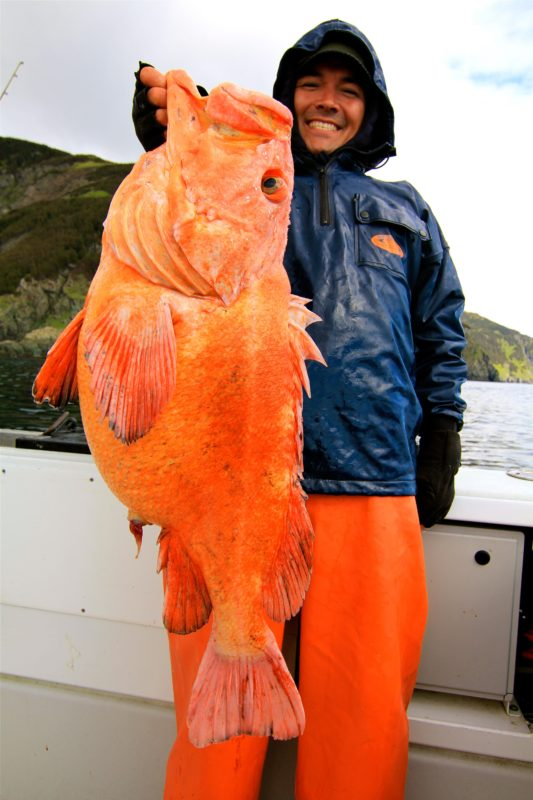 24.6lb Yellow Eye Rockfish