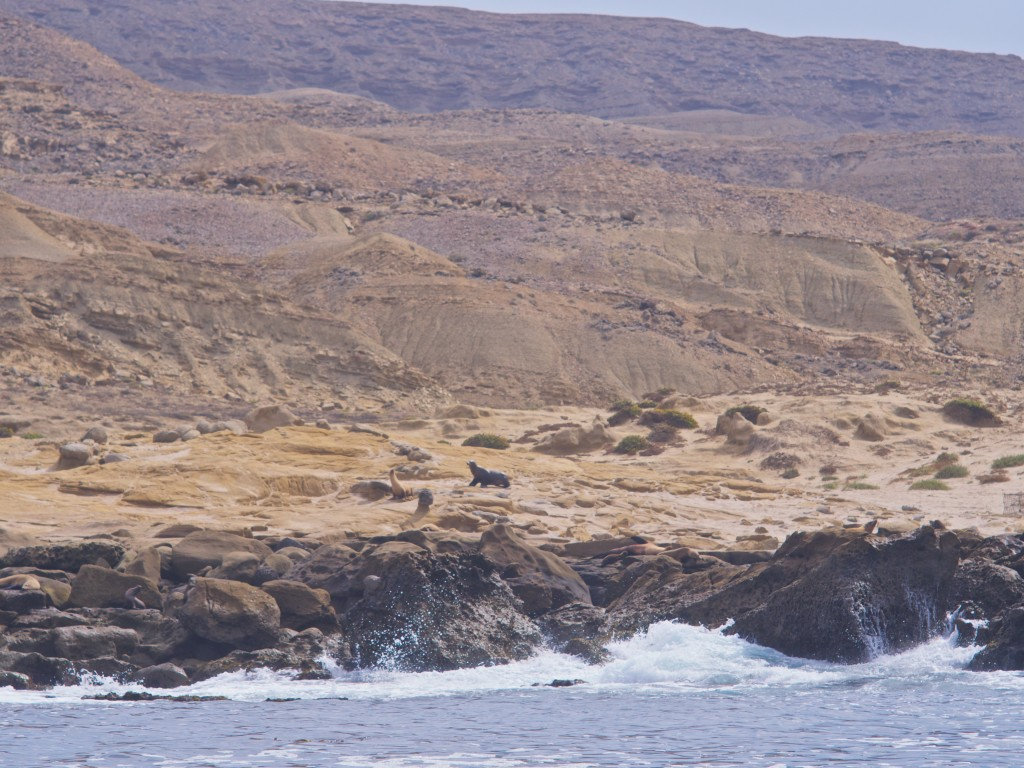 Rugged coastal frontier, complete with roaming and snarling marine mammals.